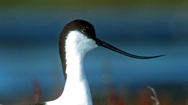 Reserva Ornitológica de Teich